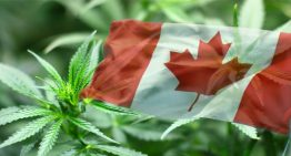Legalization of Cannabis Extracts Not Happening in Canada