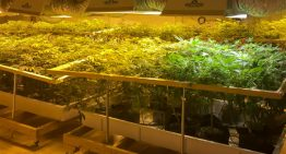 The Ultimate Guide to Better Cannabis Cultivation for Business Owners