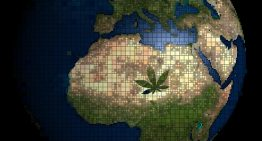 Africa Enters the Medical Cannabis Export Market