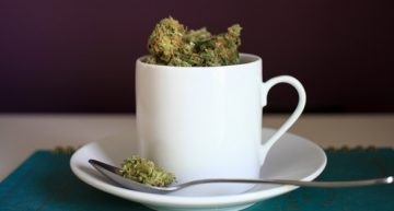 Fancy a Visit to a Cannabis Cafe, Club or Lounge?