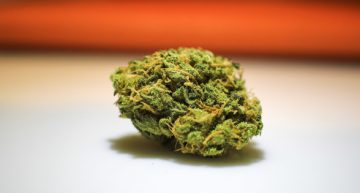 Revealing the TRUTH about Cannabis Myths and Misconceptions