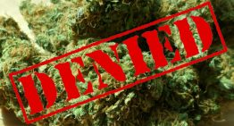 How Does the DEA Decision to Not Reclassify Marijuana Impact you?