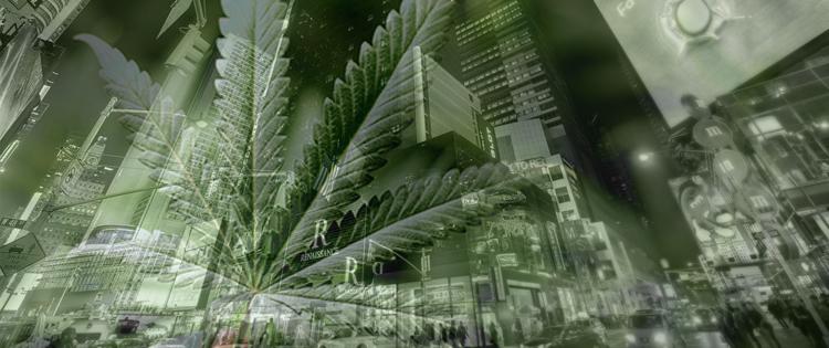 Cannabis Legalization In New York
