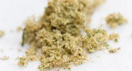 Wondering what Marijuana Kief is?