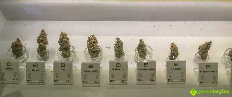 Cannabis on display in dispensary