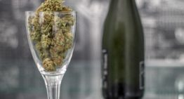 All You Need To Know To Be A Budtender
