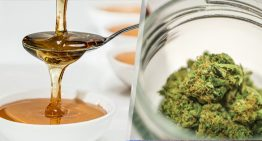 Cannabis-infused Honey – CannaHoney –  A Whole New World of Sweetness