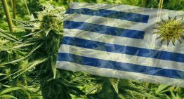 Uruguay Struggles to Keep Up with Demand for Legal Cannabis