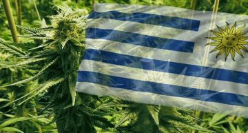 Uruguay Grinding on With Its Legal Cannabis Market
