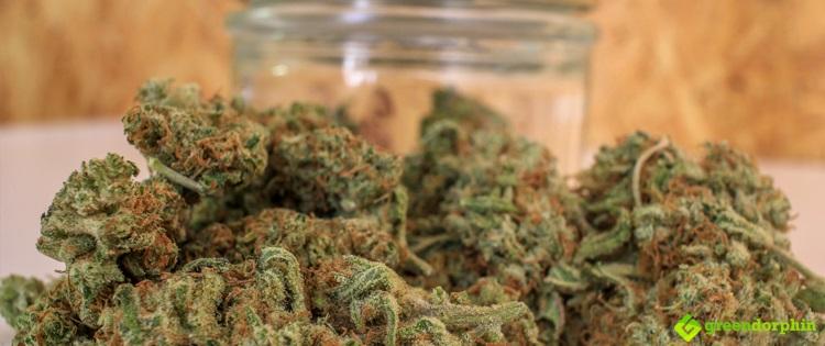 Combating Cerebral Malaria with Cannabis
