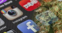 Is Social Media Important for Dispensary Owners?