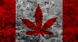 When is Justin Trudeau Going to Legalize Marijuana