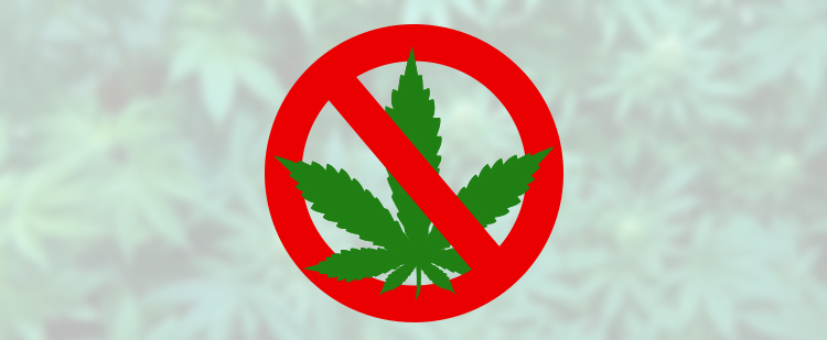 Cannabis Tolerance Does Not Last