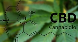 CBD and The Promising Signs for Mental Health Research