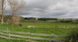 Sir Richard Branson Says, New Zealand Farmers Should Grow Cannabis Instead of Dairy Farming