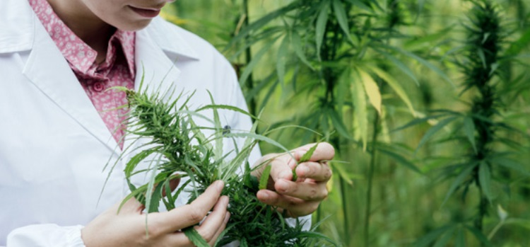 Colombian Medical Cannabis Firm, FCM Global Opens R&D Lab in Medellin Colombia