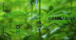 What is Cannabigerol (CBG)?