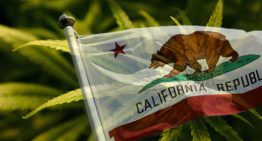 California Bill Could Blunt Workplace Discrimination for Marijuana Patients