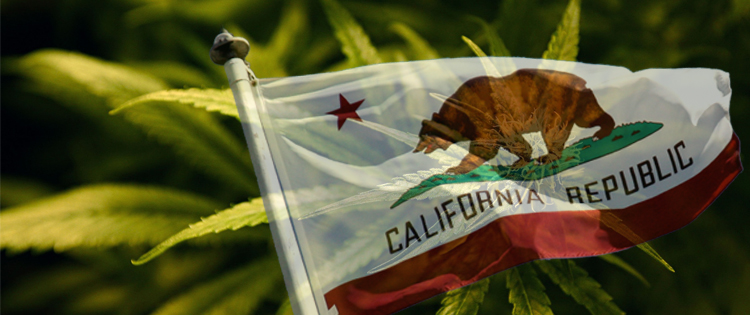 California became the first state to legalize marijuana