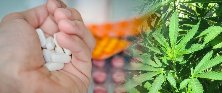 pills vs CBD