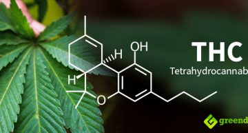 THC in Cannabis Reverses the Aging of the Brain – Breakthrough German-Israeli Research Finds