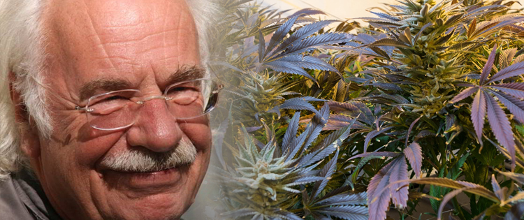 Dr Peace – A German Cannabis Doctor On The Go
