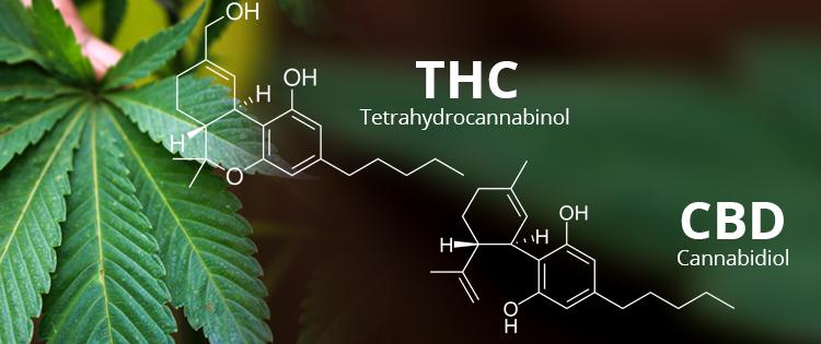 THC & CBD
