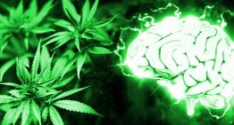 Using Cannabis Reduces Risk of Stroke Due to Greater Oxygen Delivery to the Brain – New Study Finds