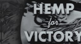 Hemp for Victory in 1942 – Easy to See Why the Government Wanted their Own Film to Disappear