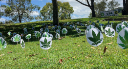 Aussie Medical Cannabis Patients May Face Challenges Accessing Welfare Payments