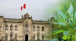 Peru is Likely to Become the Next South American Country to Legalize Medical Cannabis
