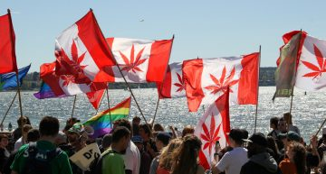 Canadian Black Market: How Large Has the Illicit Marijuana Industry Became?