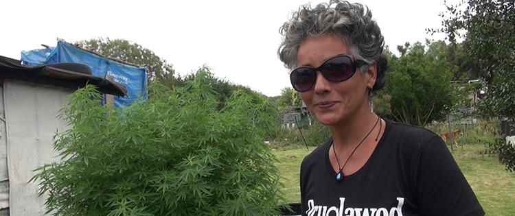 Uruguay cannabis grower
