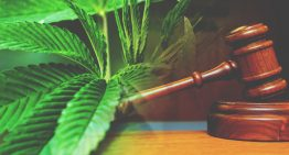 Federal Judge Recognizes Medical Properties Of Marijuana in Lawsuit Against DEA