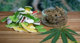 The 411 on Marijuana Edibles