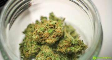 Does Marijuana Expire?