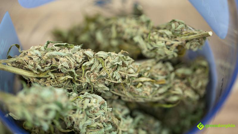 Does Marijuana Expire? - Marijuana buds