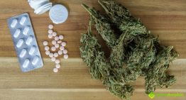 How Effective Is Medical Marijuana in Curing Drug Addiction