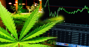 Are Marijuana Stocks Worth the Investment?