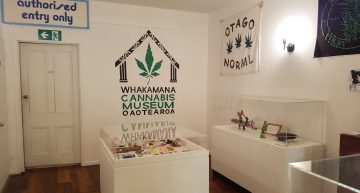 Dunedin Cannabis Museum Sets a High Standard