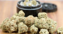 Tips to Buying Cannabis from Online Dispensaries in Canada