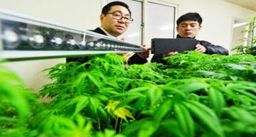 Medicinal Cannabis Coming To South Korea