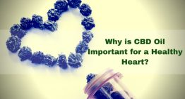 Why is CBD Oil Important for a Healthy Heart?
