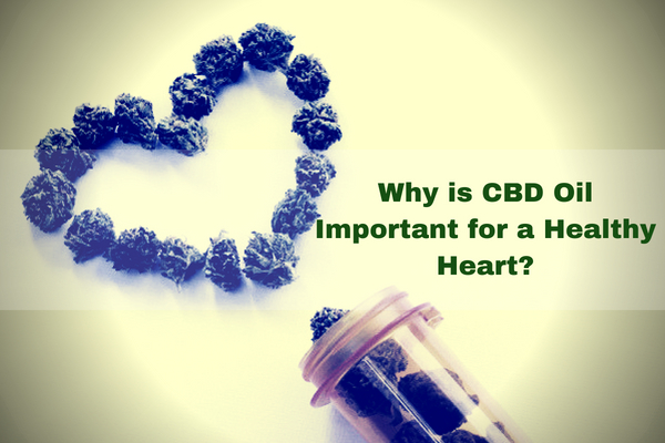 Why-is-CBD-Oil-Important-for-a-Healthy-Heart