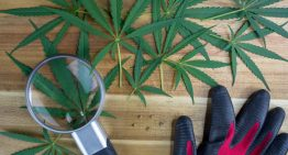 Anatomy of the Cannabis Plant: Grow with Greendorphin