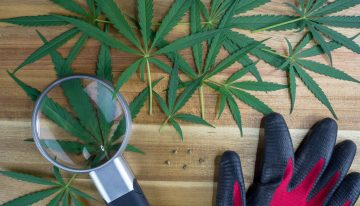 Tips to Get a Medical Cannabis Grower License