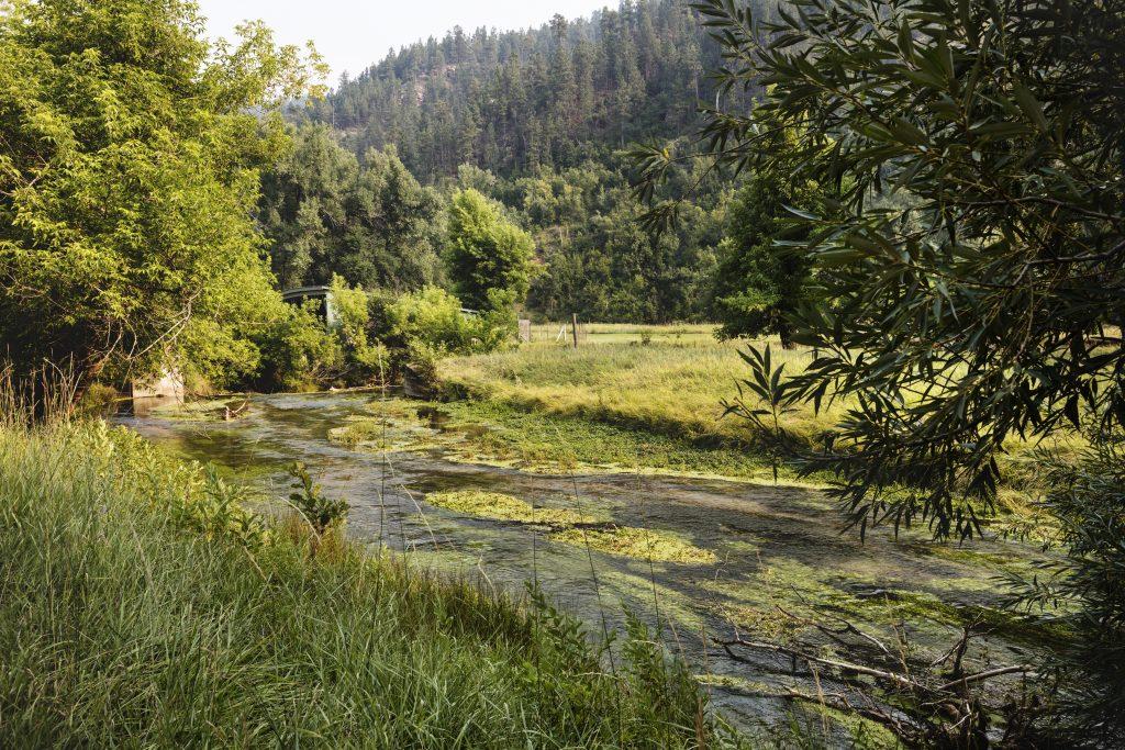 Trout stream near Buelah, Wyoming