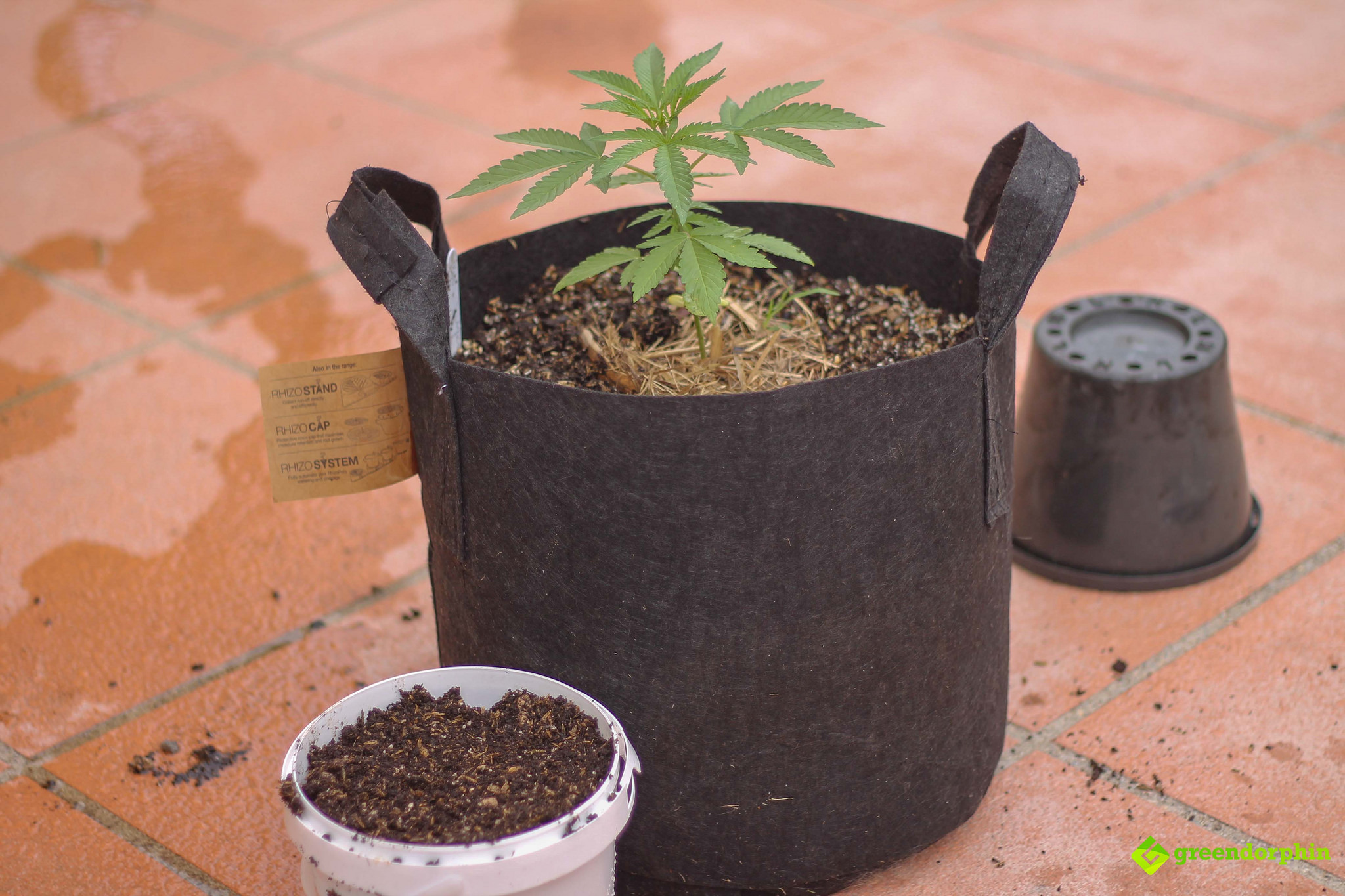 Repot Your Cannabis Plants the repot