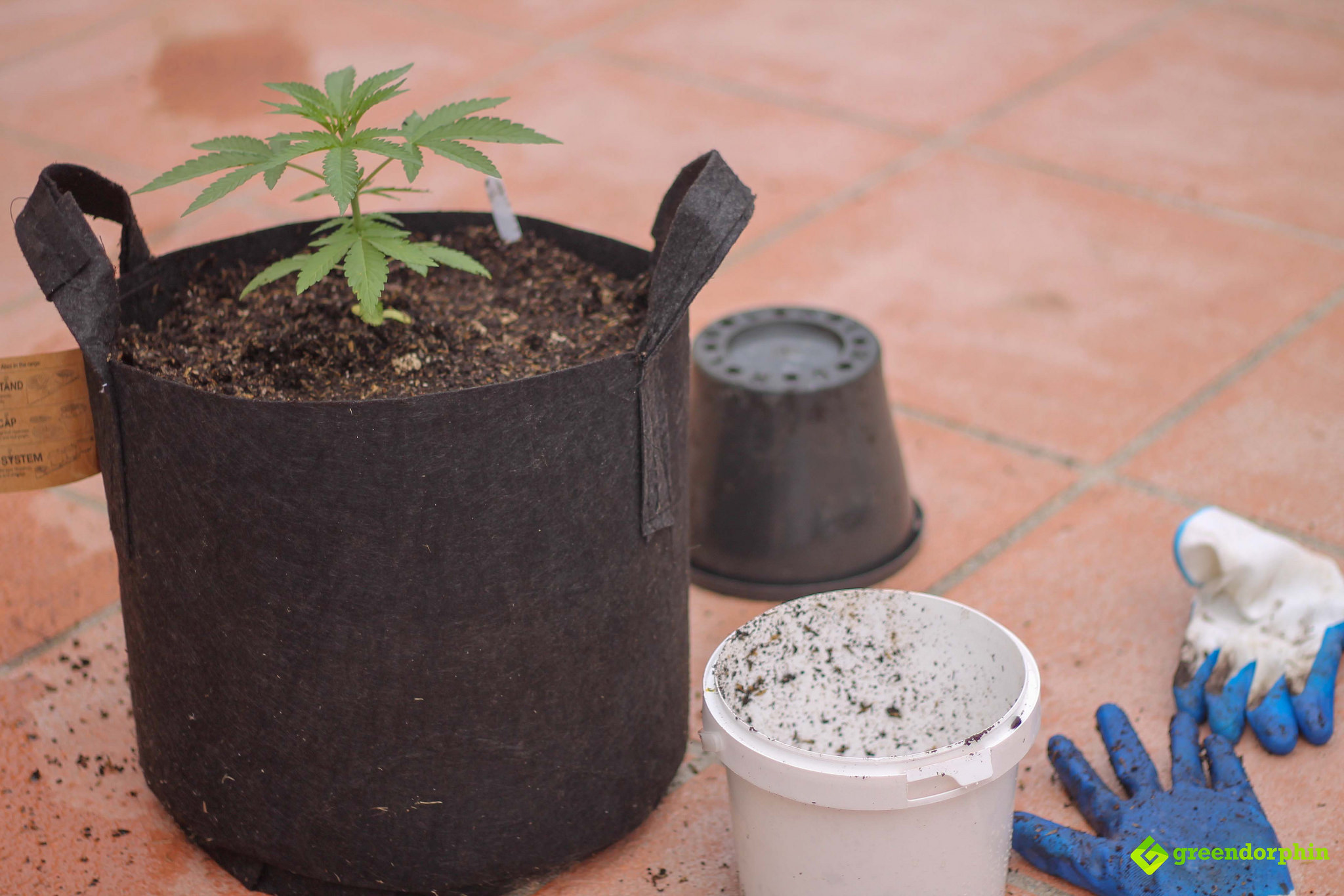 Repot Your Cannabis Plants replace displaced soil