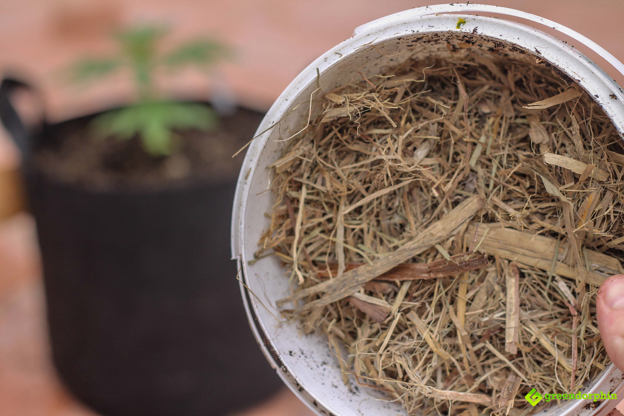 Repot Your Cannabis Plants mulch